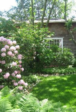 Cottage with Rhodies