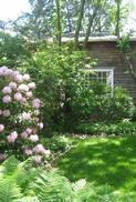 123 Cottage with Rhodies