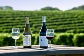 Sag Harbor Wineries